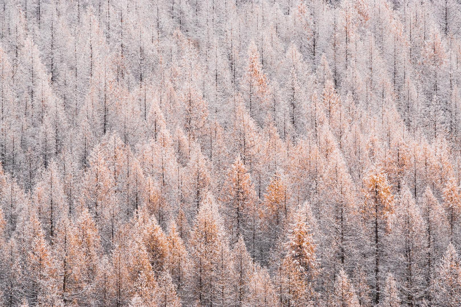 Verso l'inverno