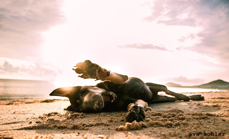 verspielter Hund am Strand von Koh Samui Teil 3