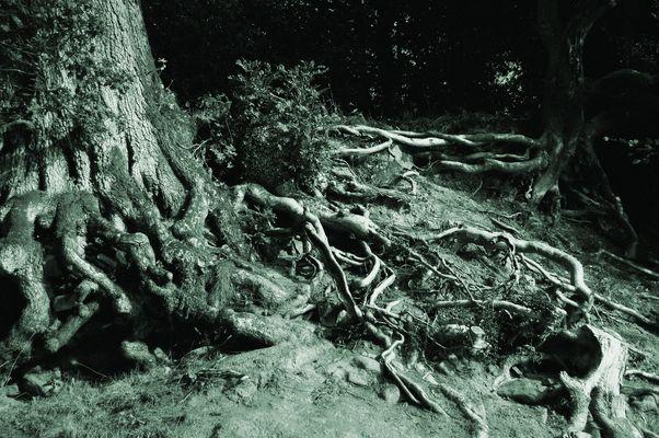 Versteck dich unter diesem Baum, Frodo!
