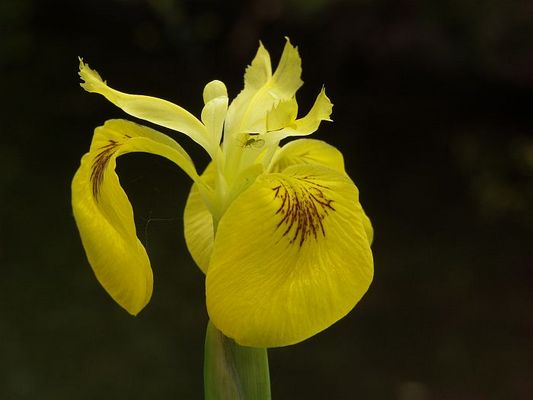 Versteck in der Blume