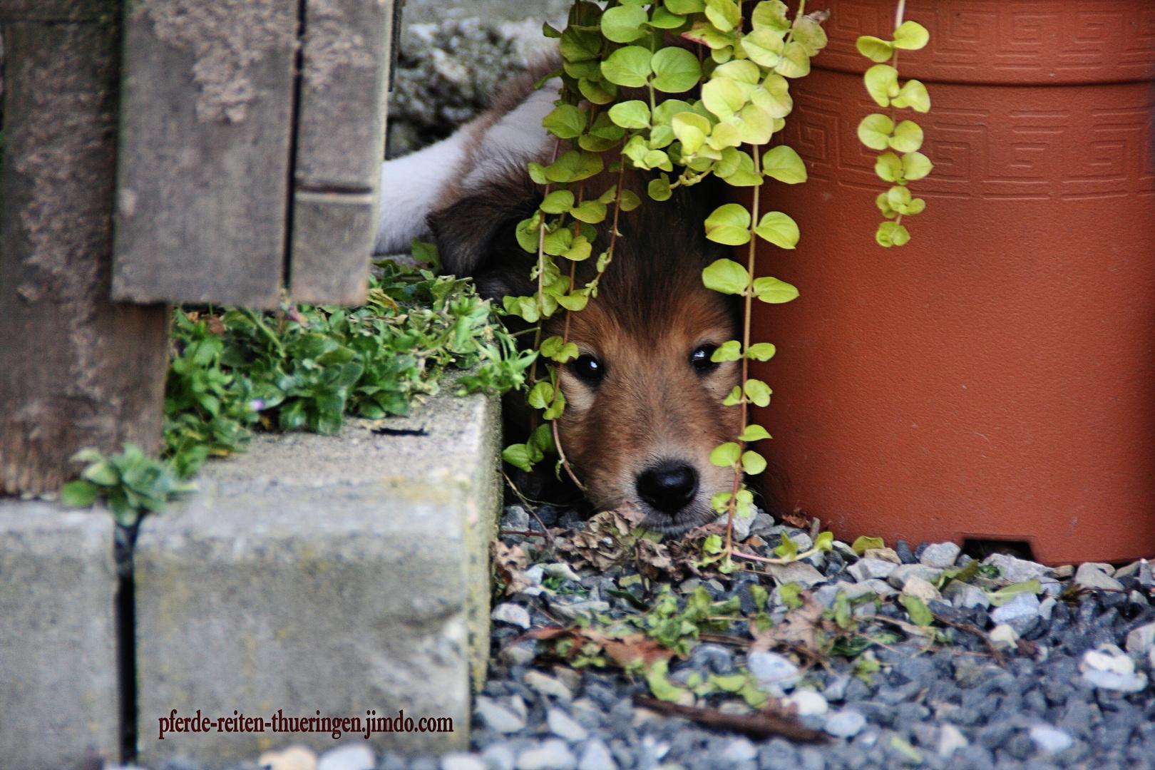Verstecken