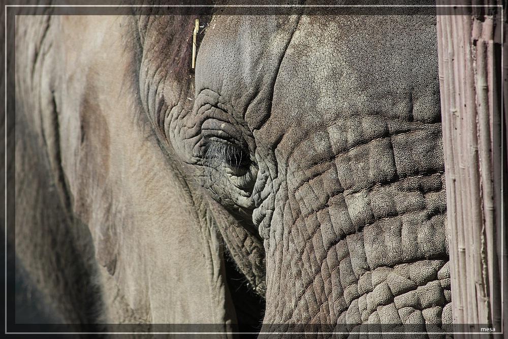 Versteckspiel mit Elefanten