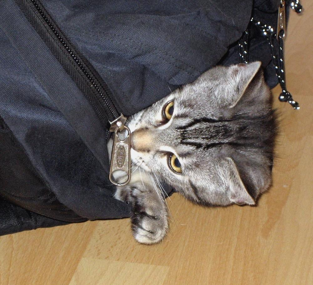 versteckt