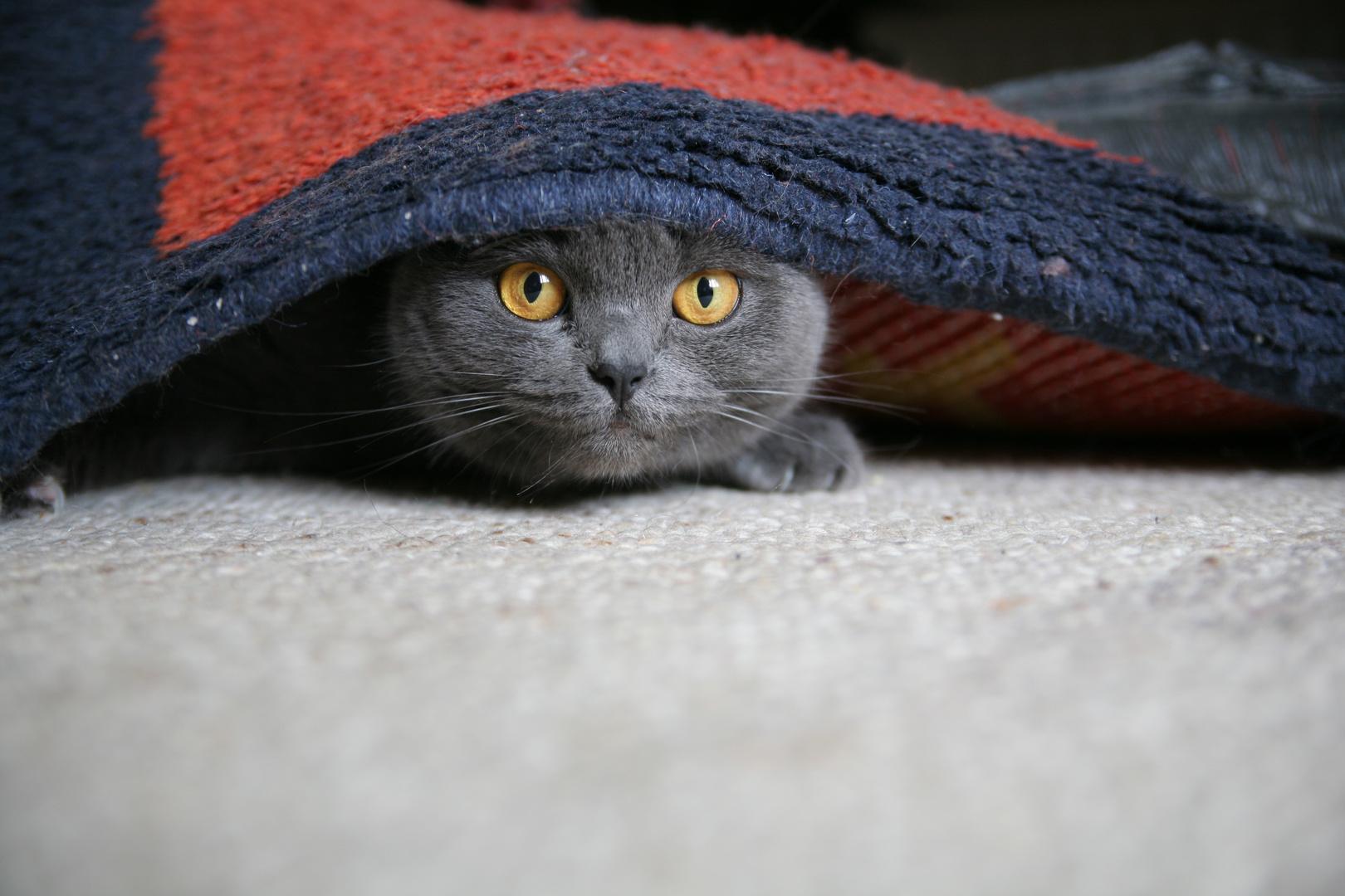 Versteckt? Entdeckt!