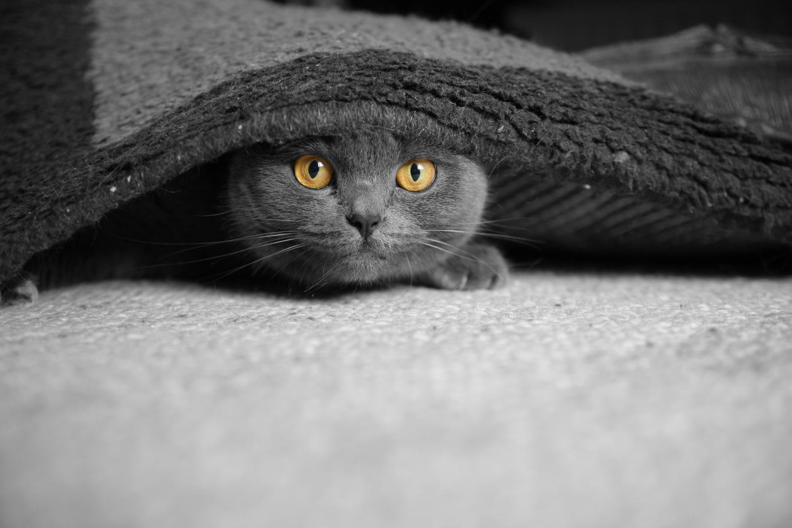 Versteckt? Entdeckt! CK