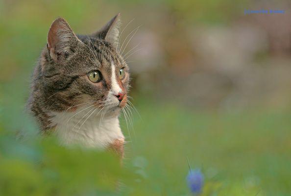 ...versteckt im Frühling...