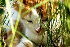 versteckt im hohen Gras