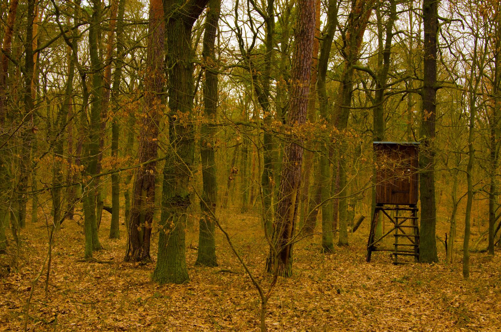 Versteckt im Wald