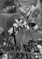 Versteckte Blume