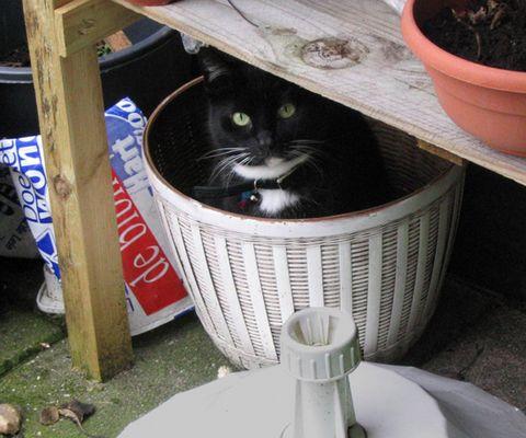 Versteckte Katze