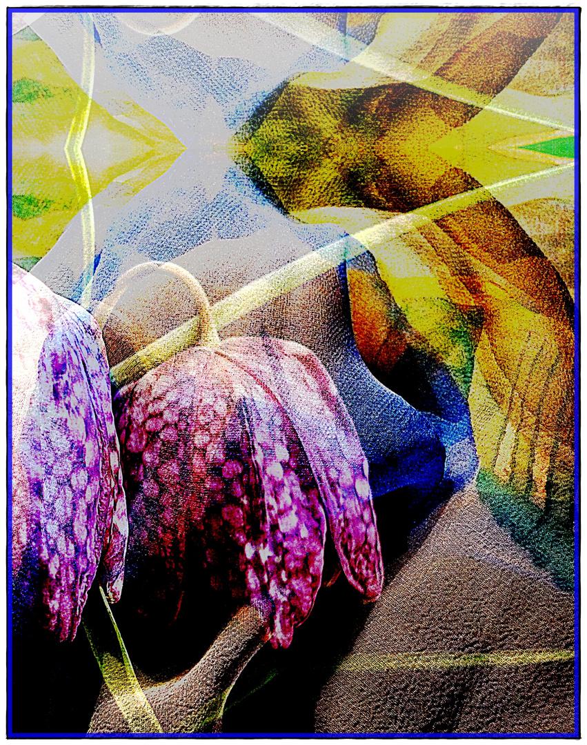 Versteckte Schachbrettblüte 2