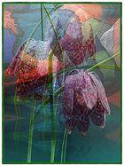 Versteckte Schachbrettblüte 4