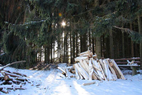 versteckte Wärme im kalten Schwarzwald