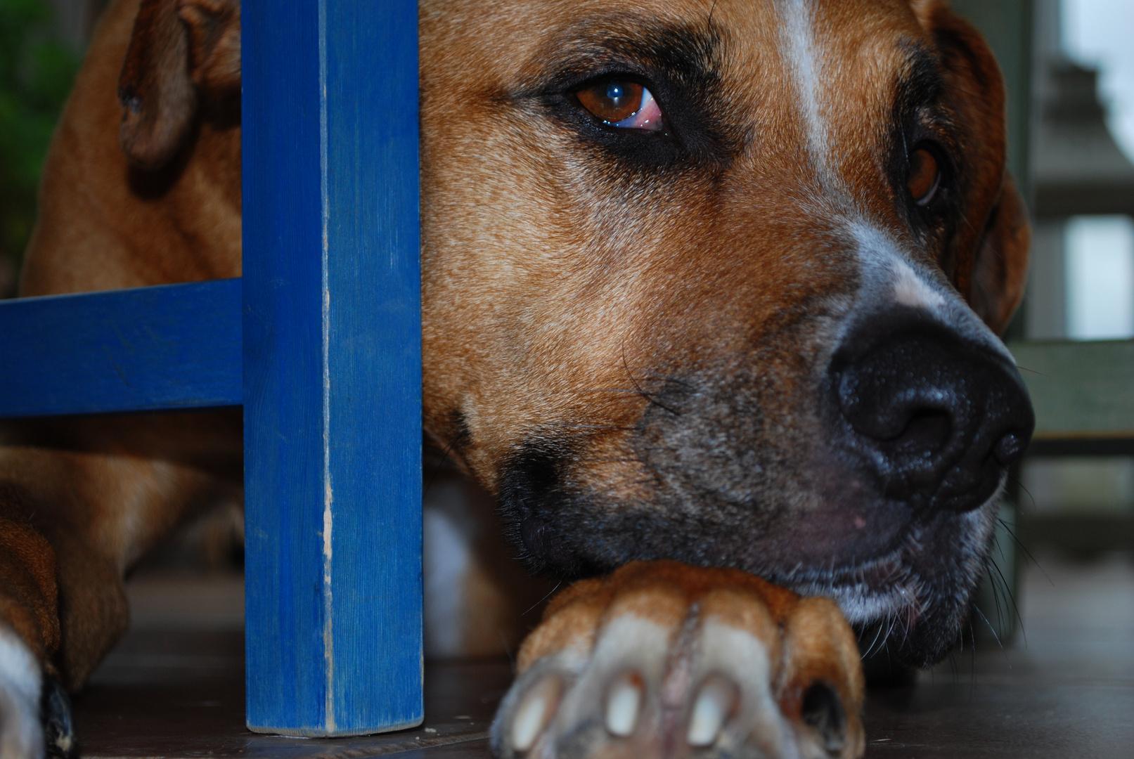 versteckter Hund