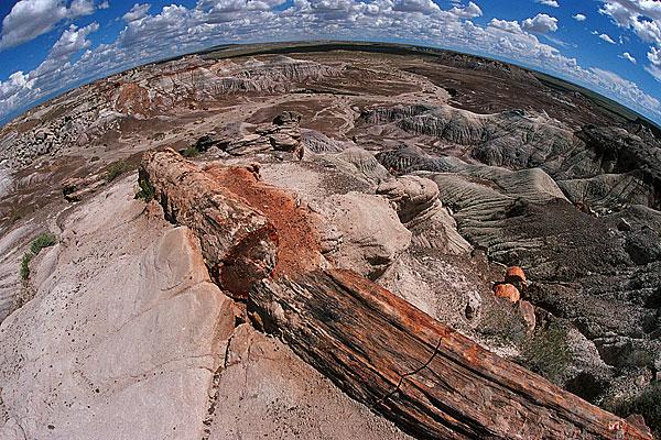 Versteinerte Bäume-Pertified Forrest, USA