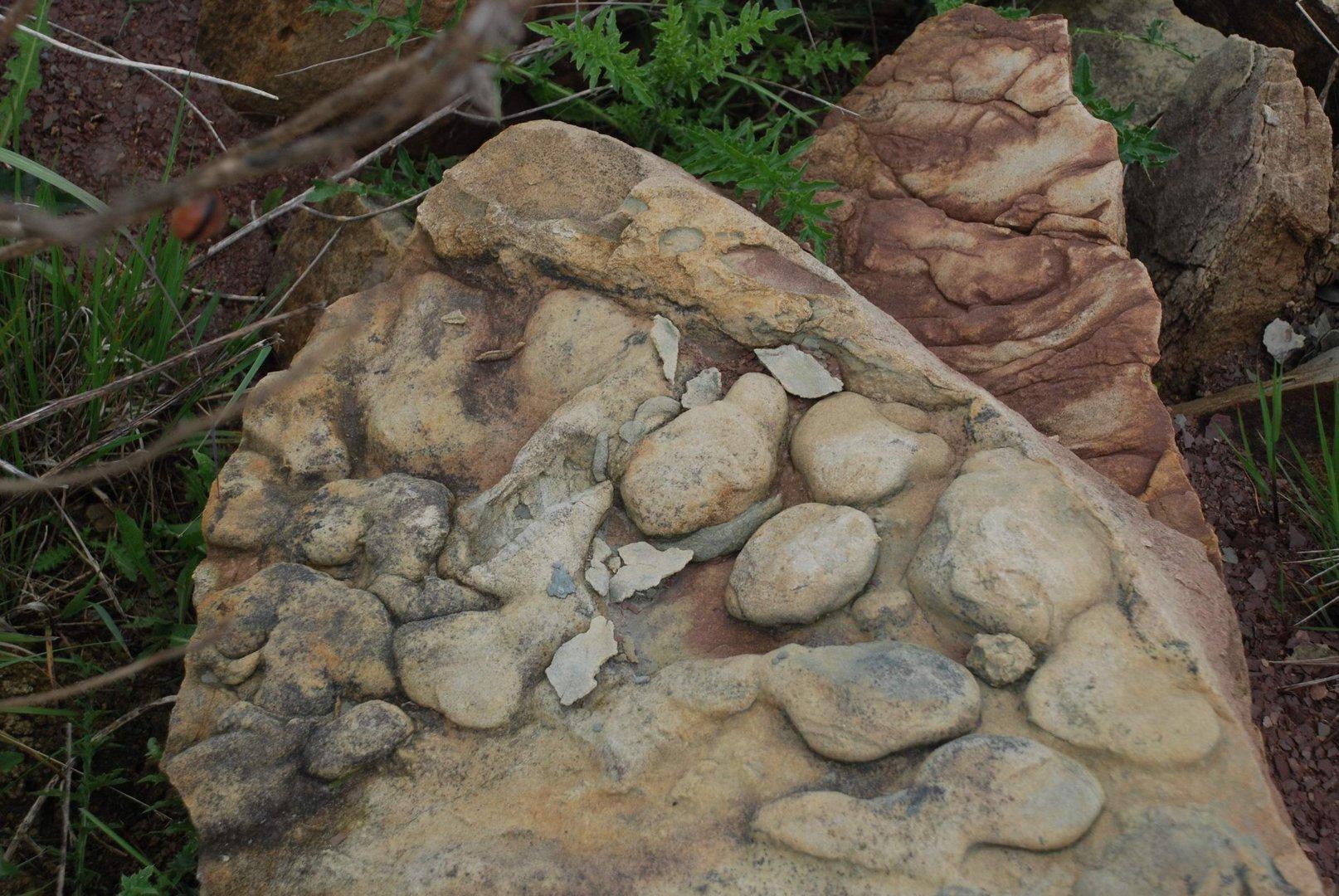 Versteinerte Steine
