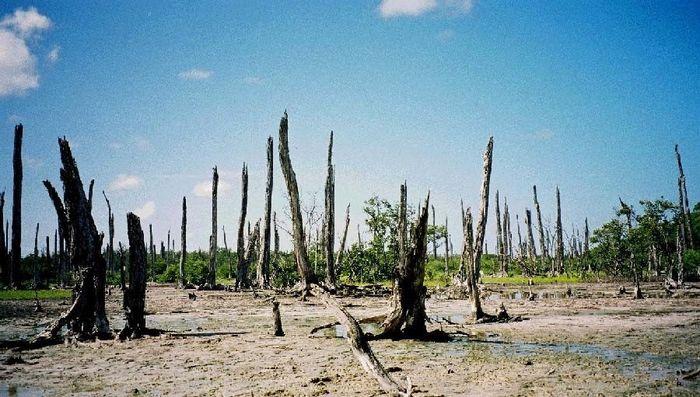 versteinerter Wald...