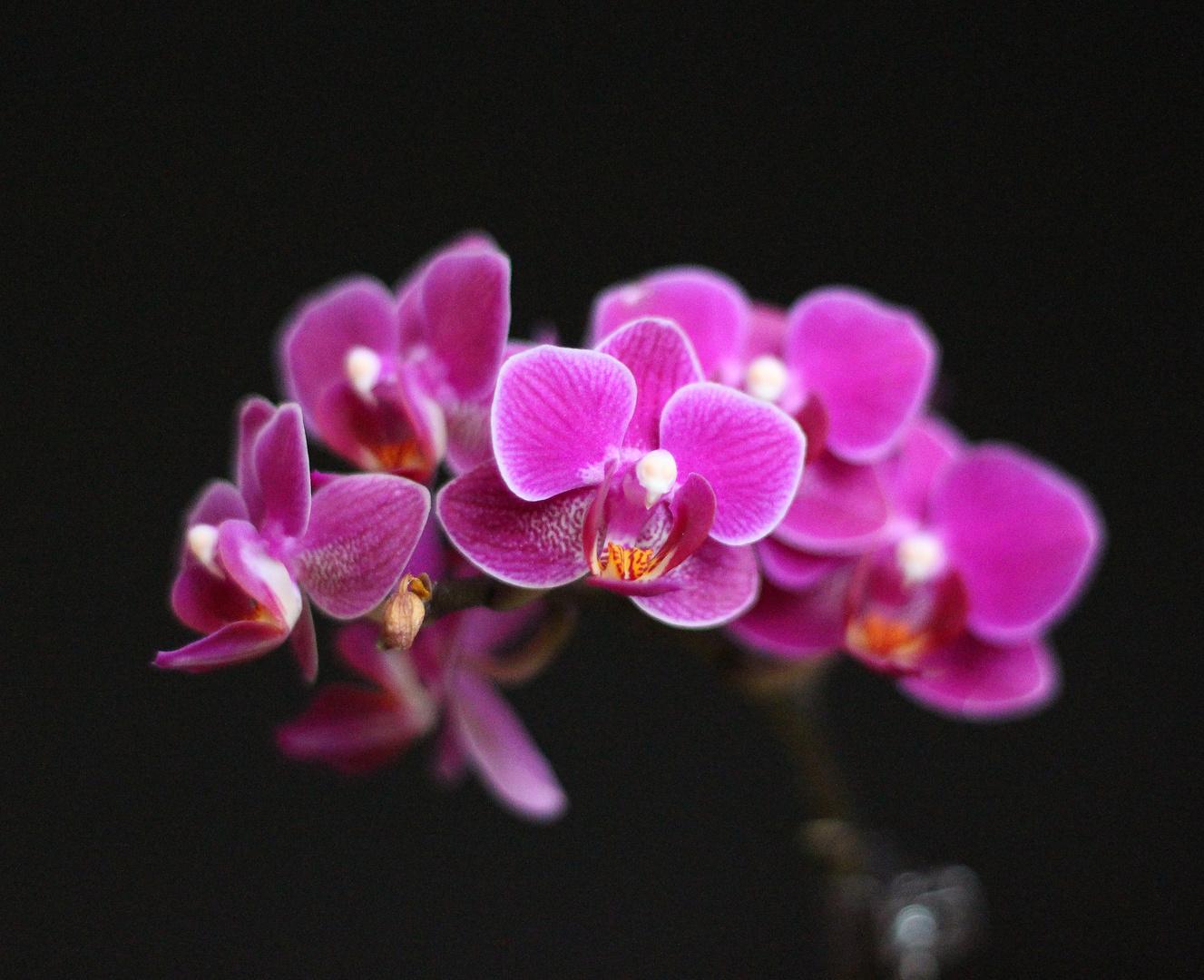 Versuch eine Orchidee zu fotografieren :)