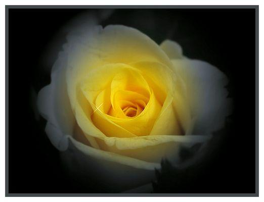 Versuch - eine rose speziell zu bearbeiten