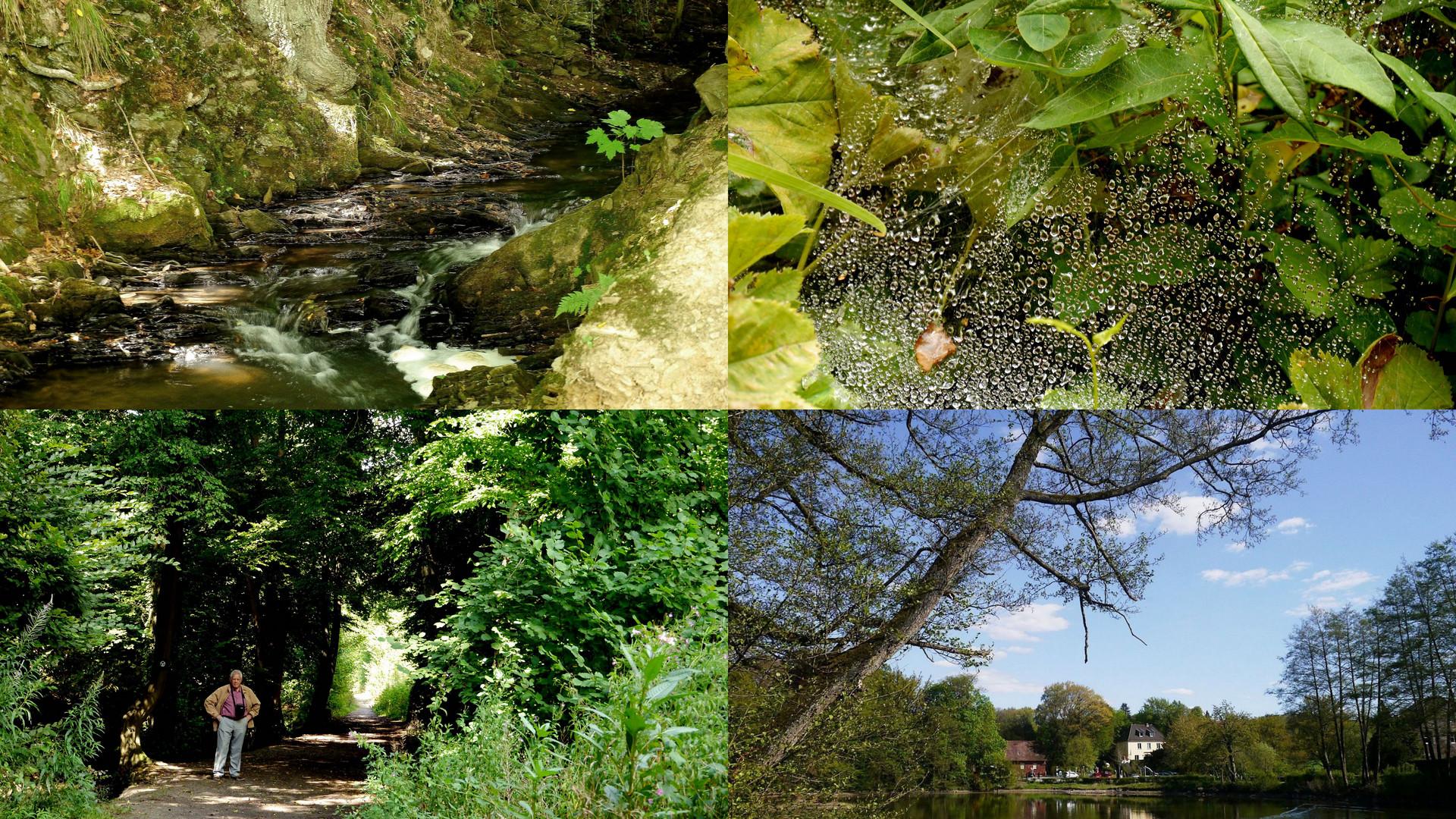 Versuch meiner ersten Collage mit Trick 17, Apprather Mühle bei Wülfrath.