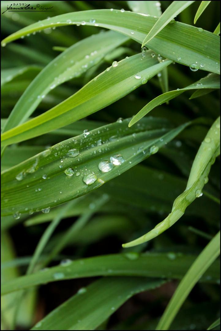 vert d'eau...