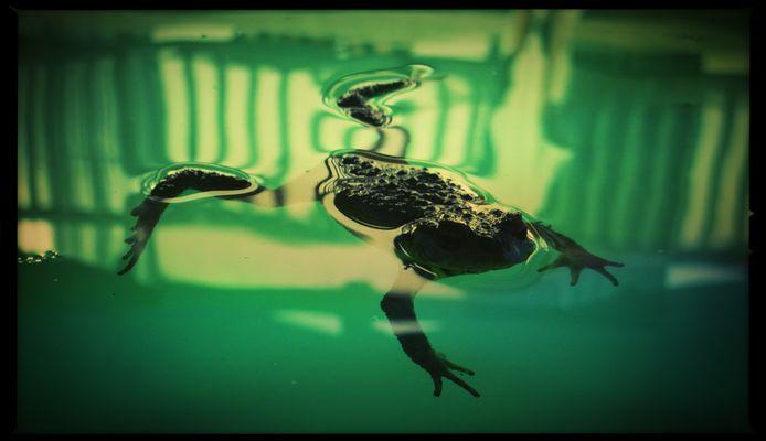 vert d'eau le crapaud.