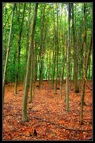 Vert été, orange d'automne