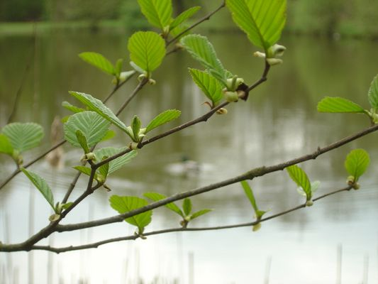 vert tendre et eau profonde