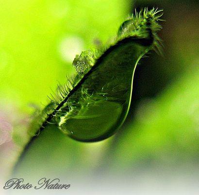 Vert vert vert