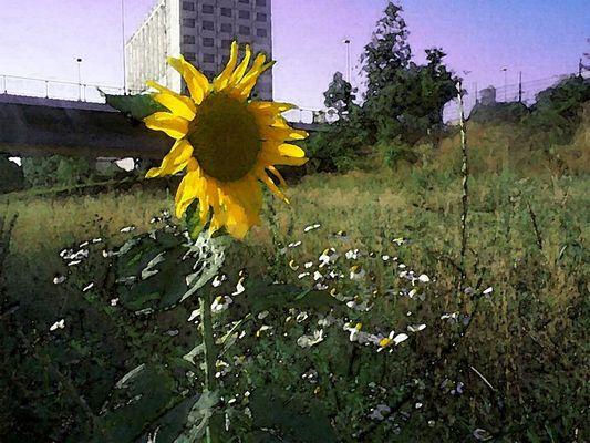 Vertäumte Sonnenblume in Aquarell getaucht
