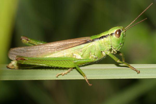 Vert'criquet...