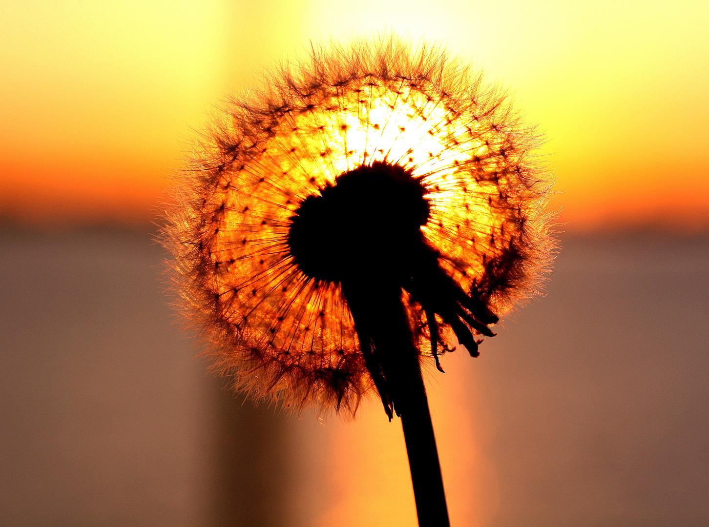 Verteile die Blüten des Lebens....