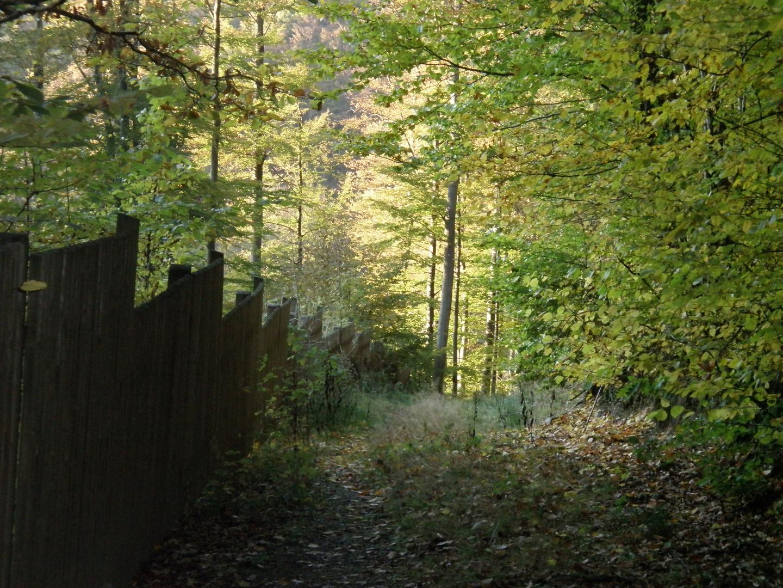 Verträumter Waldweg im November
