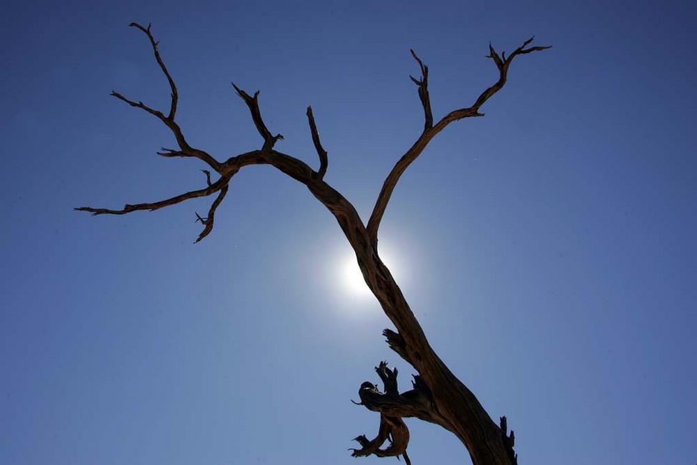 Vertrockneter Baum in Solitäre, Namibia