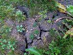 Vertrockneter Sumpf- Schwundrisse