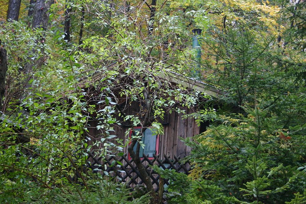 Verwachsen mit dem Wald.....