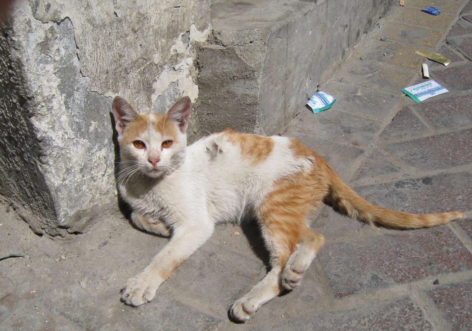 Verwahrloste Katze