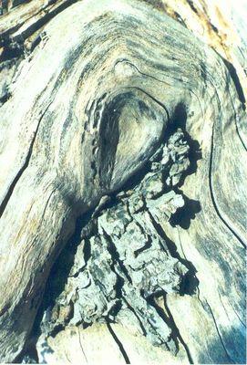 Verwaschenes Holz