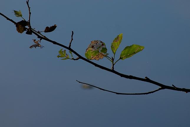 verwelkte Blätter vom blauem Wasser