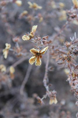 Verwelkte Blume ;-)