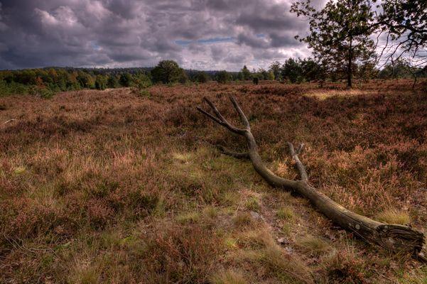 Verwelkte Heide