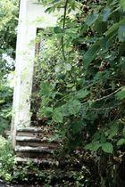Verwucherter Garten und verlassenes Haus