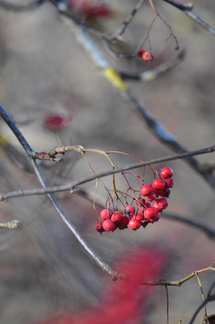 Verwünschte Beeren
