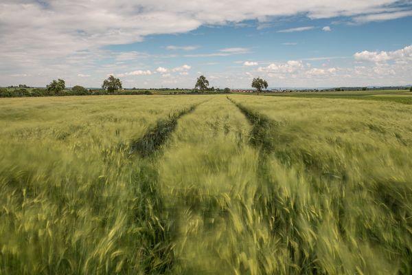 Verwundene Felder I