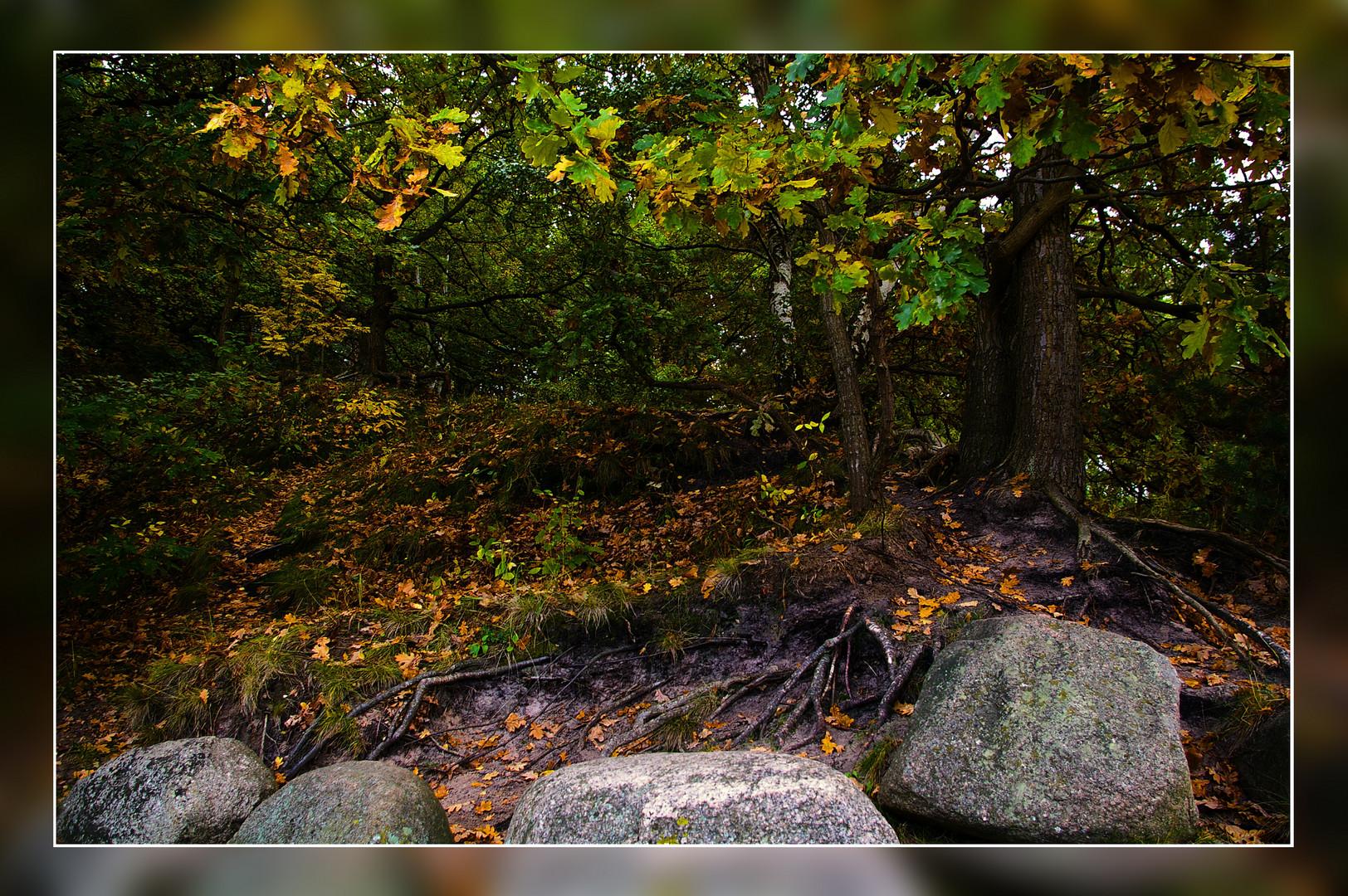 Verwunschener Trollwald