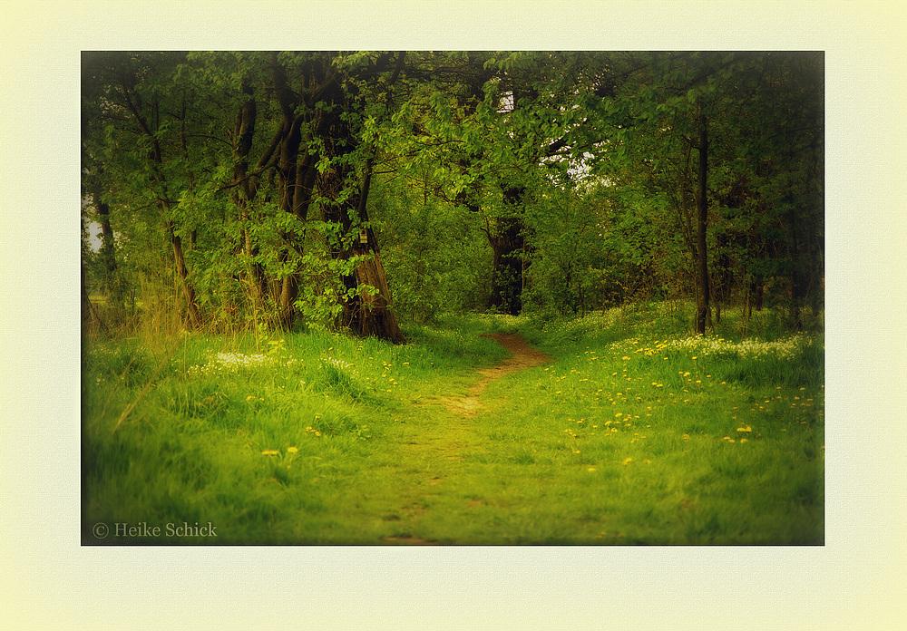 Verwunschen...Wohin führt der Weg....?