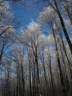 Verzauberte Bäume