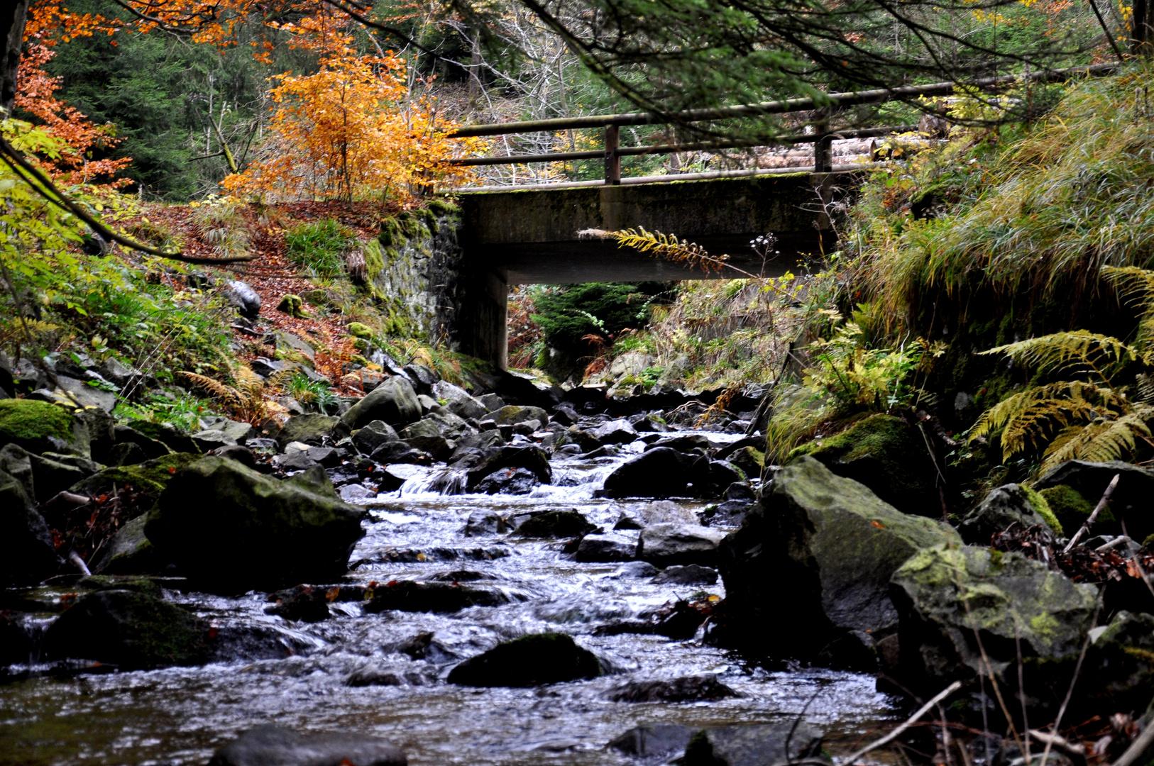 Verzauberte Welt im Harz