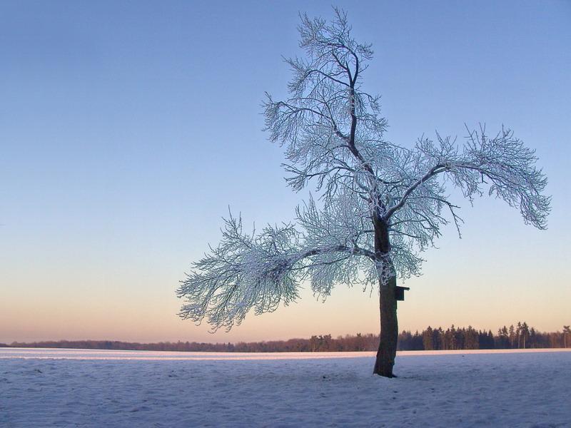 Verzauberter Baum in der Winterlandschaft