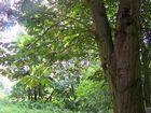 Vettelhovener Wald
